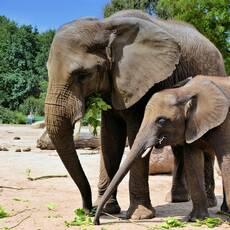 Bojnická zoologická záhrada