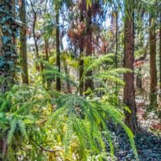 Arborétum Kysihýbel / Feistmantelova záhrada
