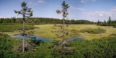 Černohorská rašelina