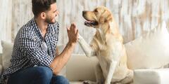 Pobyty so psom alebo mačkou