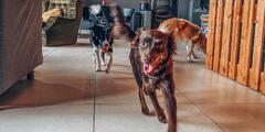 Škôlka pre psy či občerstvenie v kaviarni Dunčovňa