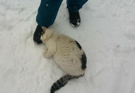 zadarmo dobrý čierny mačička veľký oholený kohút
