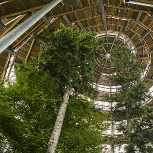 Český Chodník v korunách stromov