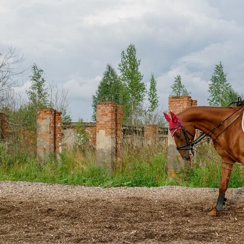 Horse Club Nitra - Lužianky
