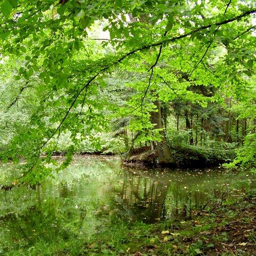 Arborétum, Sárvár