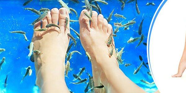 Wellness pedikúra rybičkami Garra Rufa