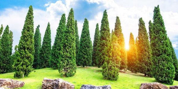 Rýchlorastúce slovenské tuje Smaragd + BONUS hnojivo pre tuje smaragd GRÁTIS