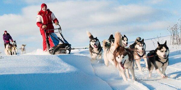 Celodenný výlet na psom záprahu alebo hodinová jazda. Zážitok na celý život!