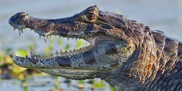 Vstupné do Krokodílej ZOO alebo Vodné plazy naživo