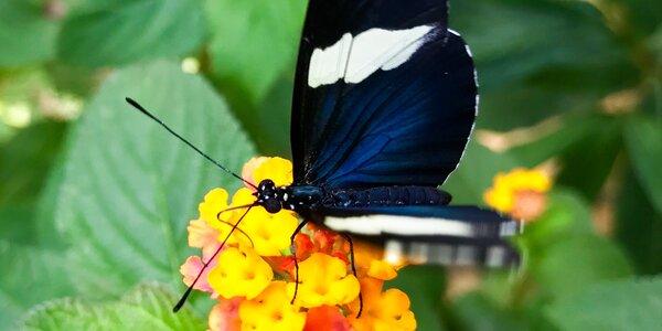 Celodenná vstupenka do motýlej záhrady