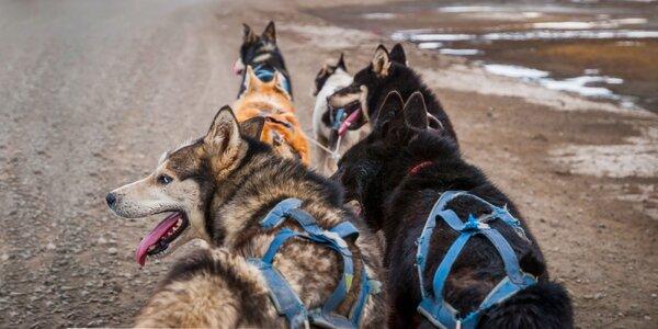 Jazda so psím záprahom na štvorkolke