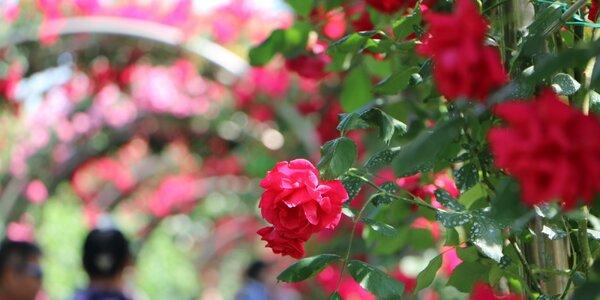 Zájazd do Rakúska na Dni ruží v Badene a zámok Mayerling