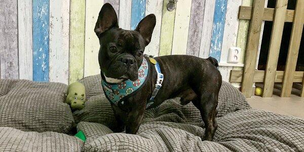 Denná škôlka DOGY pre vašich psíkov