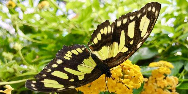 Tip na výlet   Motýlia záhrada v Liptov Aréne Tatralandia
