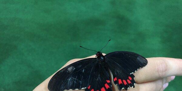 Dotkni sa prírody a objav pestrofarebný svet motýľov!
