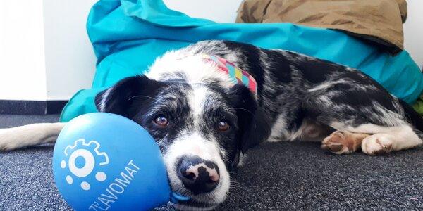 Firemné benefity Zľavomatu: Časť III: So psom do práce