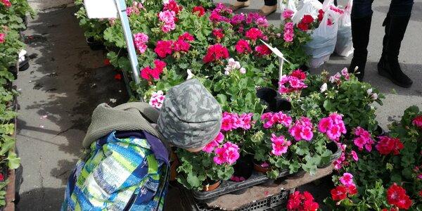 Aká bola FLÓRA – najkrajšia výstava jari