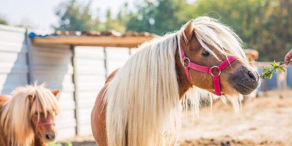 RODINNÝ VČELÍ MAJER: prehliadka farmy aj jazda na poníkovi