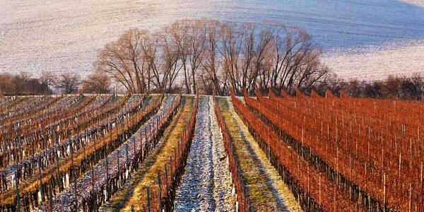 Zážitkový vinársky pobyt na Slovácku: degustácie aj wellness
