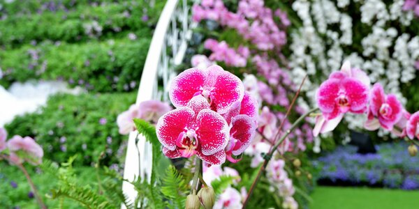 Jednodňový zájazd do Viedne - výstava kvetov a návšteva nákupného centra