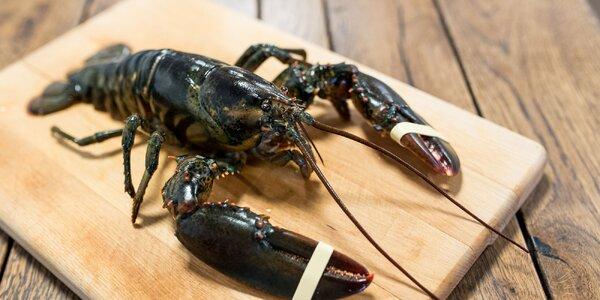 Exkluzívne degustačné večere s morskými špecialitami