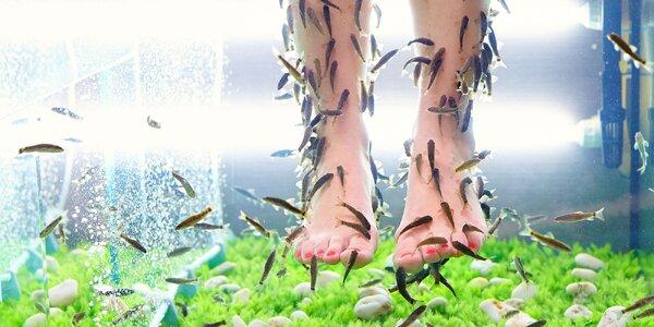 Pedikúra rybičkami Garra Rufa či mokrá pedikúra