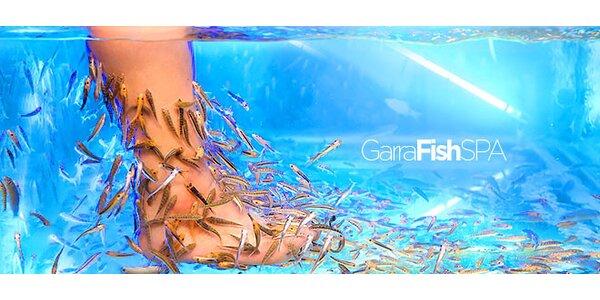 Kúpeľ alebo pedikúra s rybičkami Garra rufa