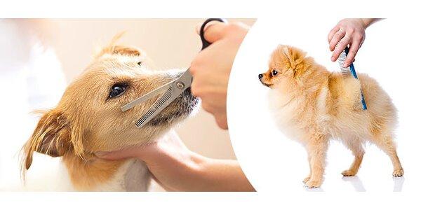Letný zostrih pre vášho psíka