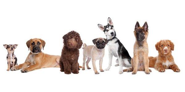 Kompletná starostlivosť o Vášho psieho miláčika v psom salóne Hafanana