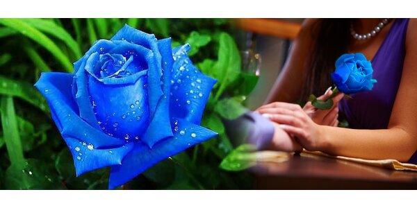 Vypestujte si vzácne modré ruže