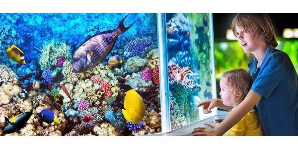 Morský svet - zábava pre celú rodinu
