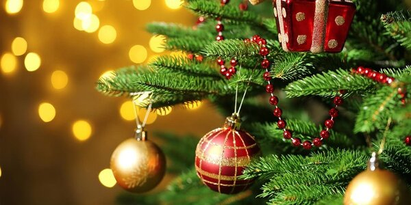 Krásne živé vianočné stromčeky