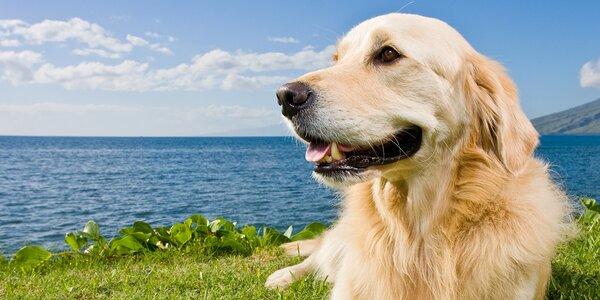 Výhodné balíčky pre psov