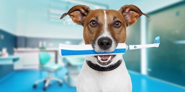 Profesionálna zubná hygiena pre psov