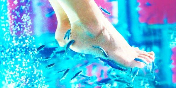 Pedikúra liečivými rybkami Garra Rufa
