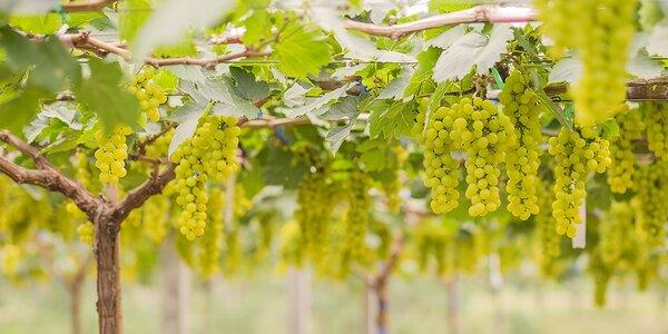 Tokajská vínna jeseň - relax, história, víno - bez nástupných poplatkov