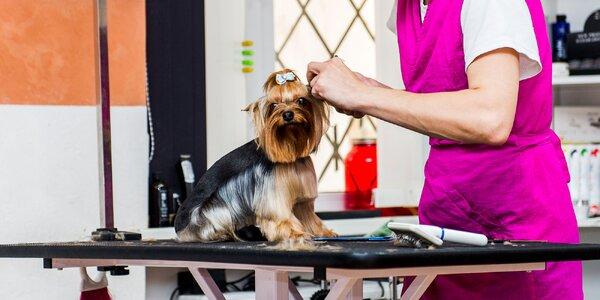Profesionálne strihanie psíkov v Salóne Kamoš