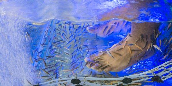 Biopedikúra rybičkami Garra rufa