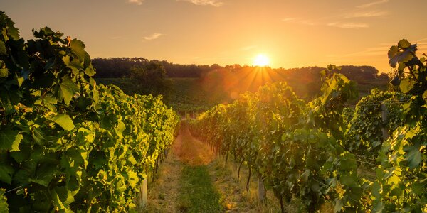 Jedinečný vinársky pobyt aj s wellness pre 2 osoby