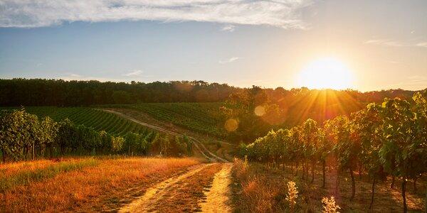 Dovolenka na Južnej Morave - útek za vínom a pohodou