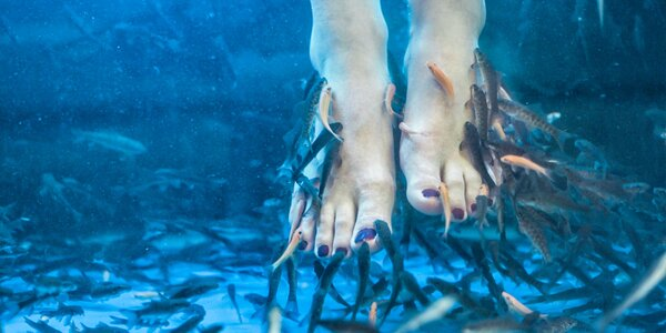 Fish therapy - pedikúra rybičkami Garra rufa