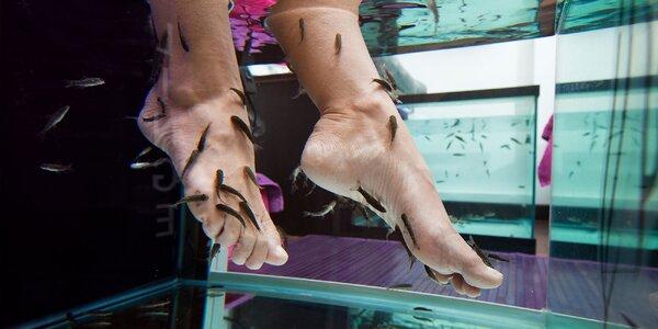 Bio pedikúra chodidiel rybičkami Garra Rufa