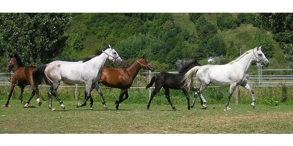 Hodina jazdy na koni s trénerom