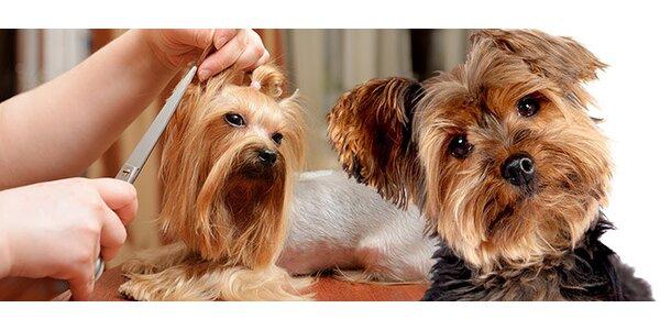 Strihanie a starostlivosť o psíka