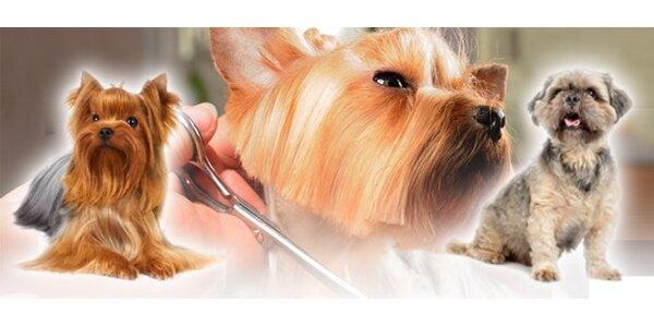 5,70 eur za strihanie psov – malé plemeno