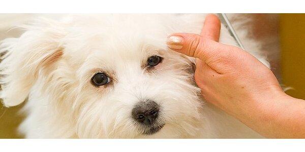 Strihanie a kompletná starostlivosť o psíka