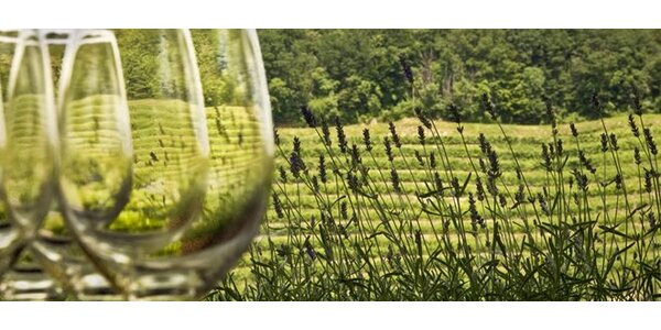 Talianske víno z oblasti Friuli