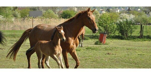 KONSKÝ KLUB - 4 hodiny plné koní