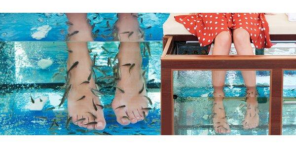 Relaxačný a liečebný kúpeľ s rybičkami Garra Rufa