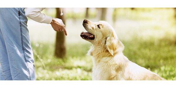 Vianočný poukaz na výcvik psa